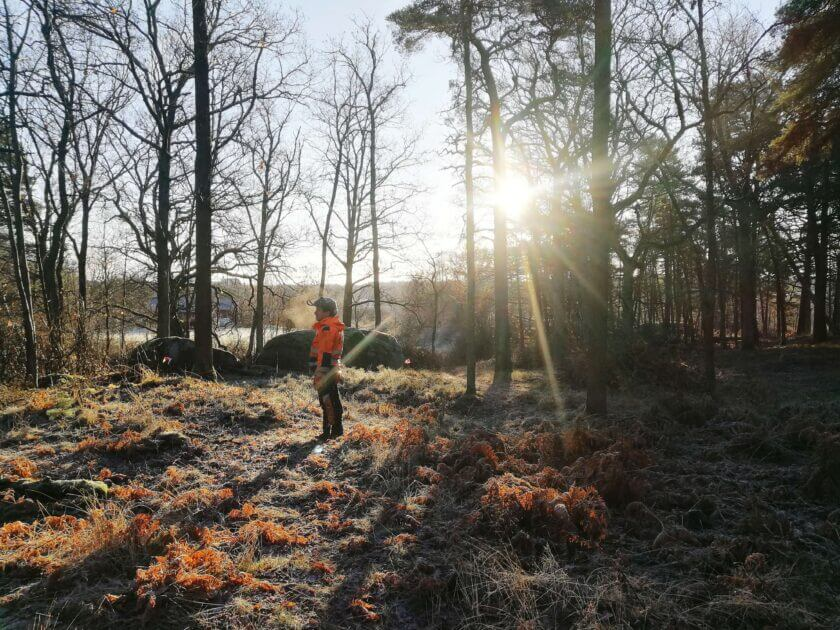trädbesiktining-göteborg-stockholm-jacksons-trädvård trädbeskärning trädfällning naturvård stubbfräsning