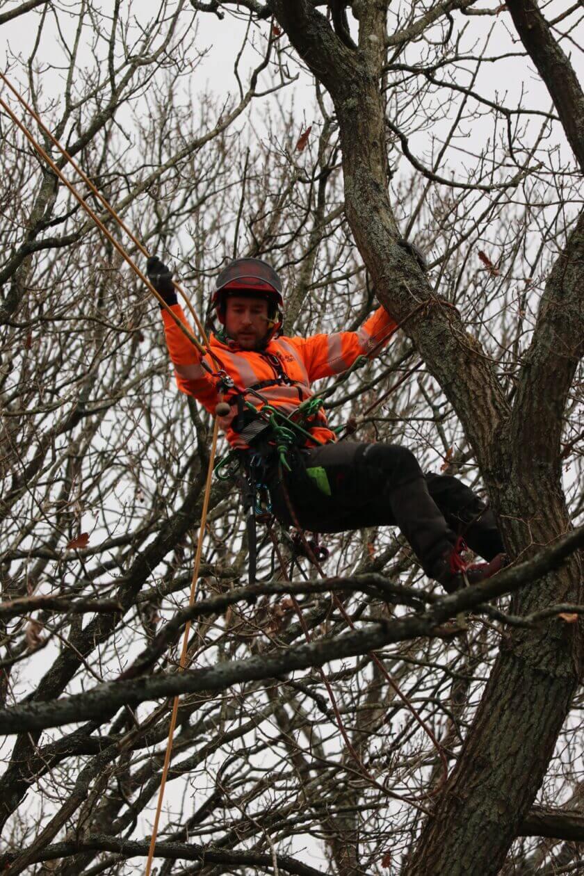 Jacksons-Trädvård Stockholm-Göteborg-Skaraborg trädfällning beskärningträd trädbeskärning