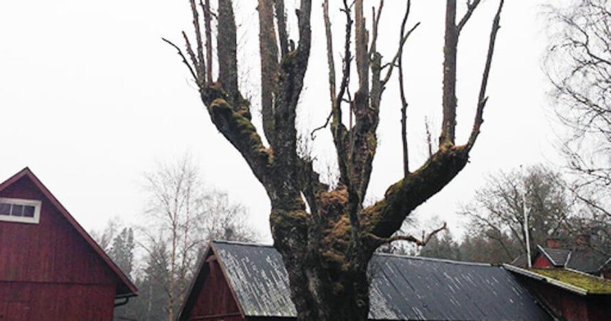 Jacksons-Trädvård-Ask-Länsstyrelsen-Jönköping