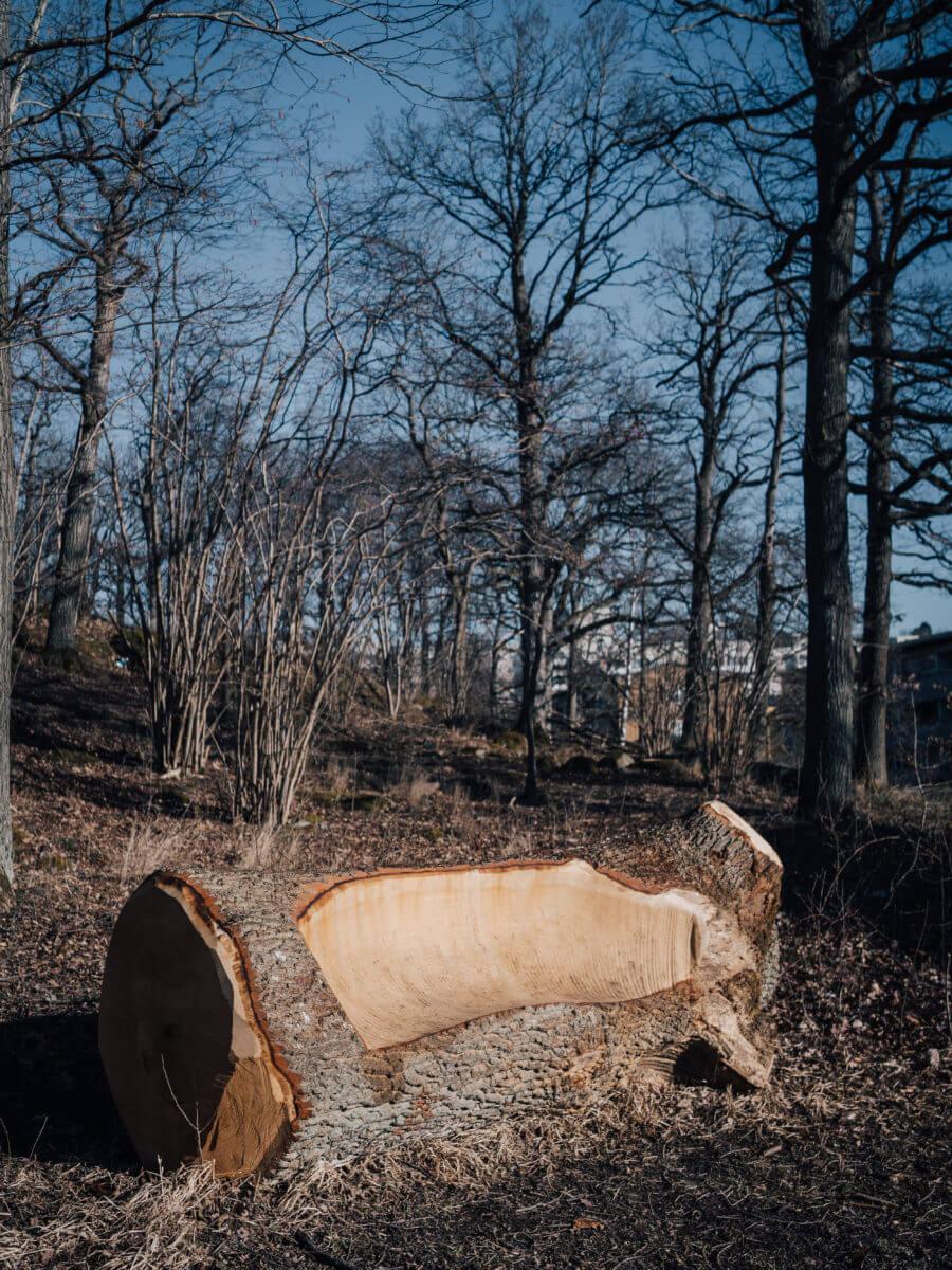 jacksons trädvård återbruk bänk natur ute