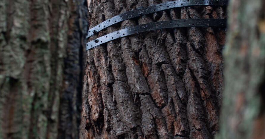 jacksons-trädvård-mulmholk