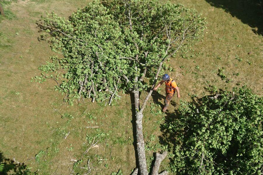 Jacksons-Trädvård-trädfällning