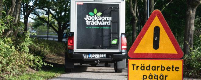 Jacksons Trädvård -trädarbete pågår