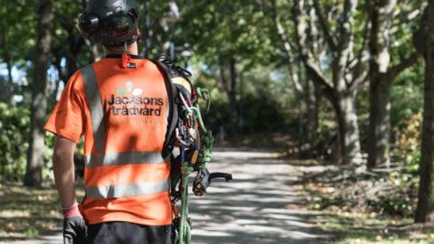 konsultation-jacksons-trädvård