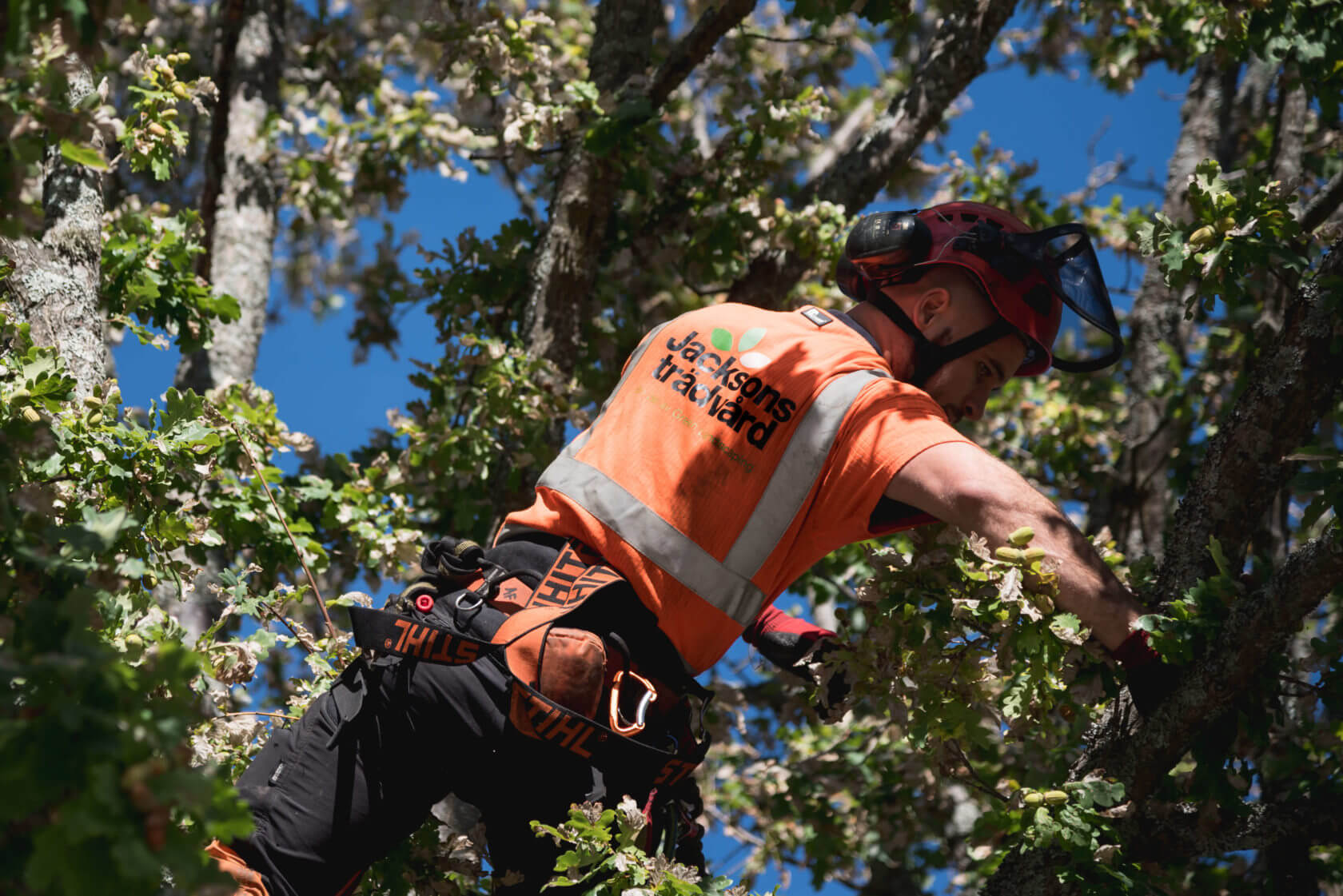 Jacksons-Trädvård-arborist