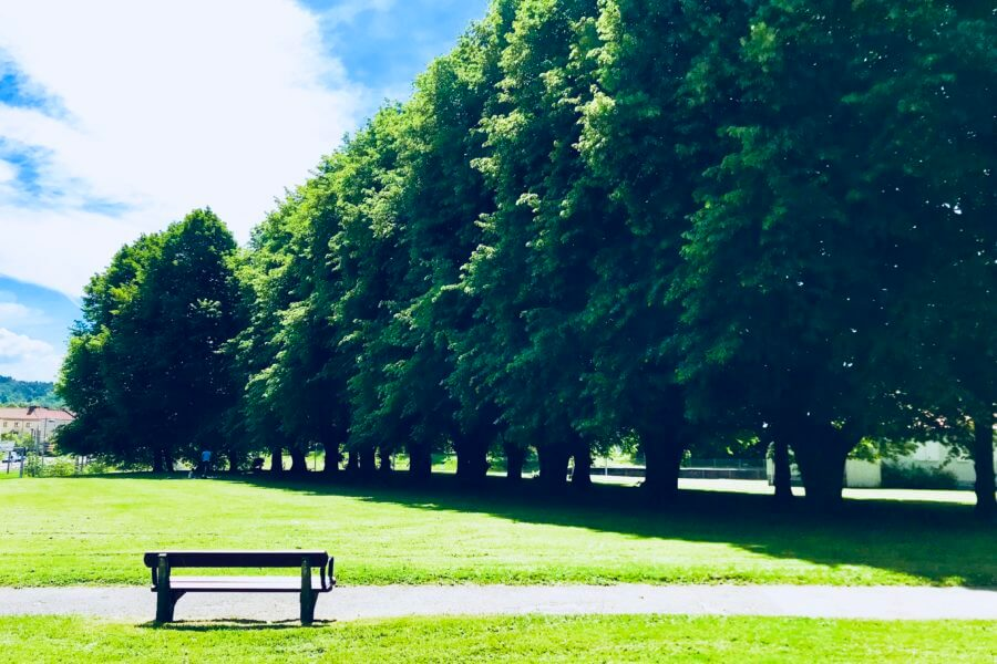 jacksons-trädvård-trädallé