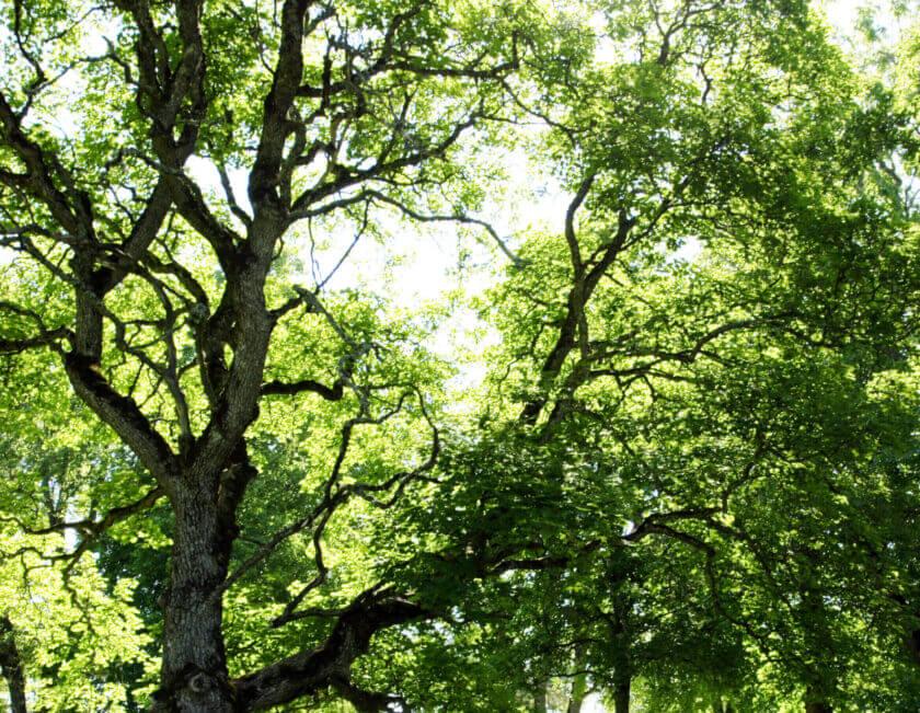 Jacksons-Trädvård Stockholm-Göteborg-Skaraborg trädvård trädfällning naturvård beskärning trädåtgärder trädbeskärning naturvårdJacksons-Trädvård Stockholm-Göteborg-Skaraborg trädvård trädfällning naturvård beskärning trädåtgärder trädbeskärning naturvård arborist