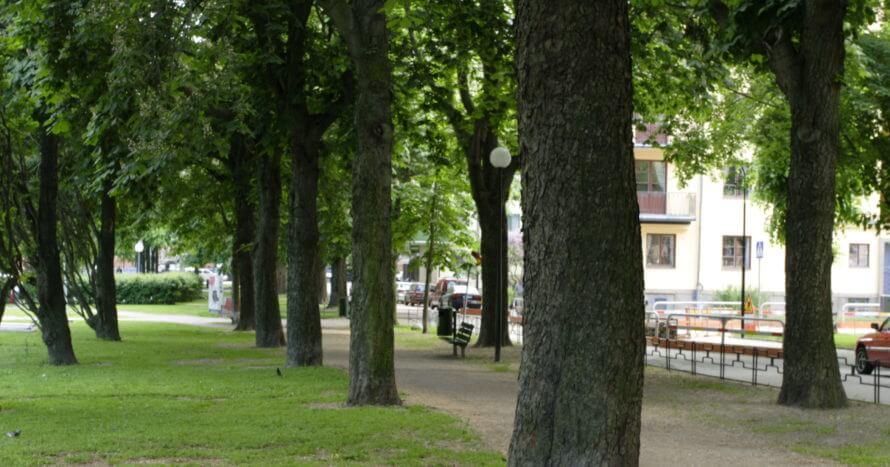 Jacksons Trädvård-tessinparken
