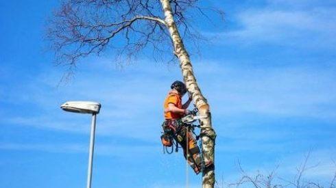 Jacksons Trädvård Göteborg Skara Lidköping trädfällning trädbeskärning stubbfräsning