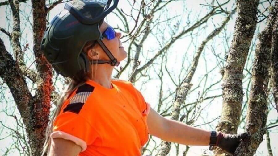 Jacksons Trädvård Göteborg Skaraborg trädfällning trädbeskärning arborist