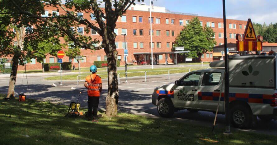 Jacksons Trädvård Skaraborg Mariestad