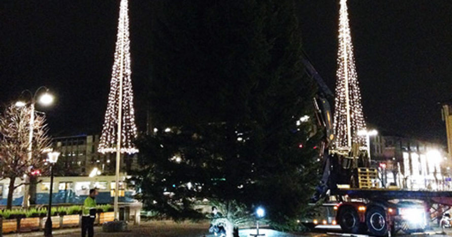 Julgran 2014 på plats