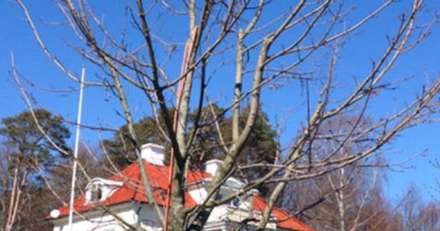Onsala kyrka göteborg jacksons trädvård träd