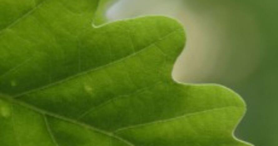 Ref-Naturvard-FlatensNaturreservat-jacksons-trädvård-naturvård