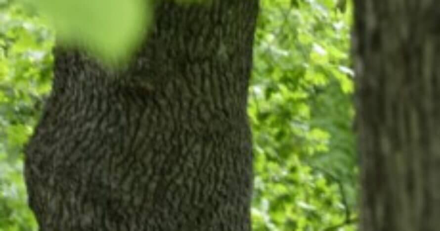 Ref-Naturvard-Langsjon-jacksons-trädvård