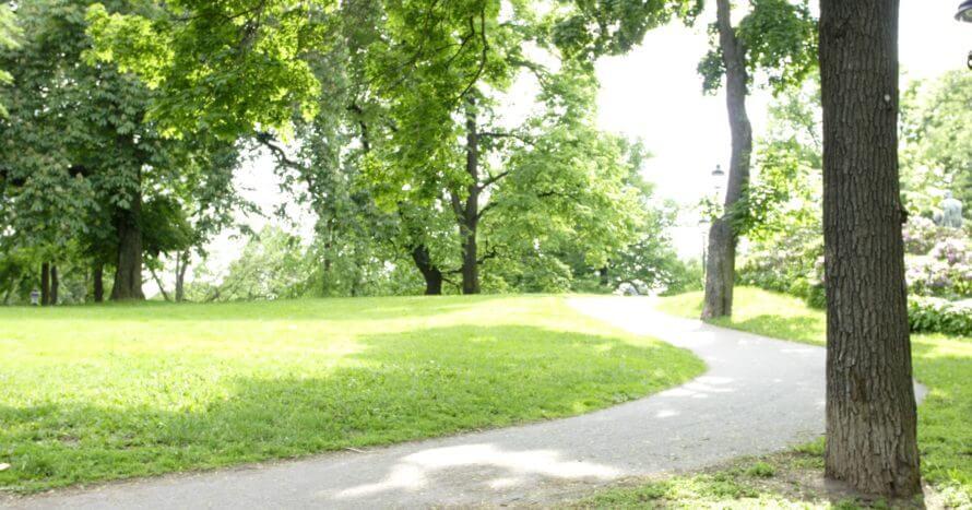 Jacksons-Trädvård-park