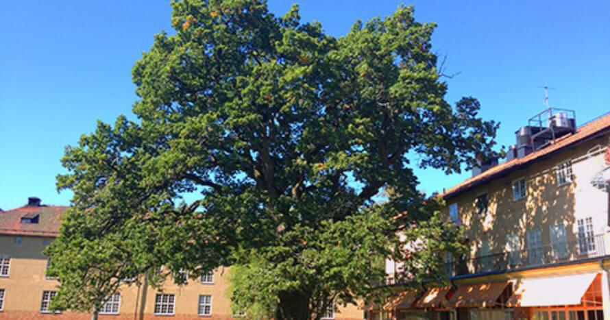 göteborgstad jacksons-trädvård