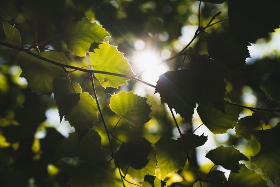 jacksons-trädvård-beskärning-trädvårdsplan