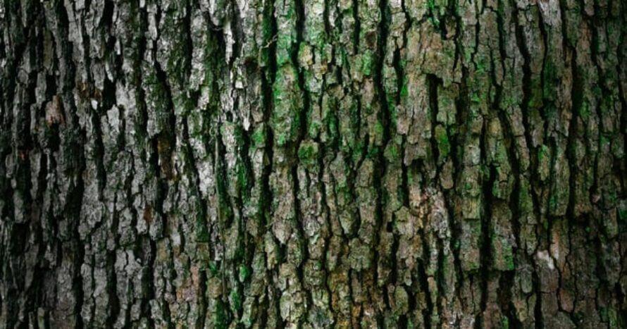 jacksons-trädvård-träd