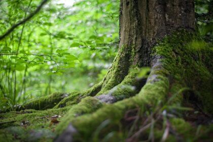 jacksons trädvård rotfräs arbortist