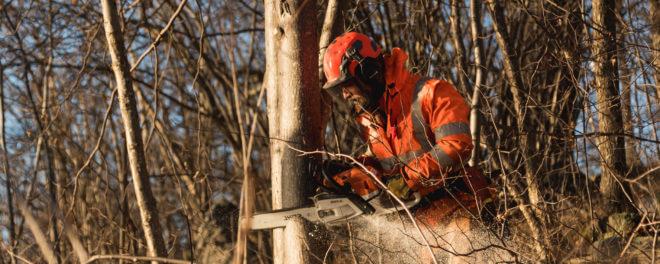 jacksons trädvård trädfällning stockholm göteborg helsingborg