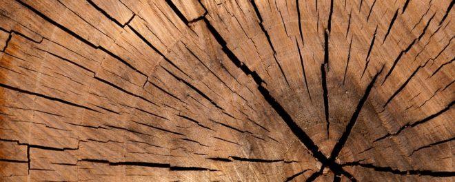 jacksonsträdvård stubbfräsning stockholm stubbfräsning göteborg