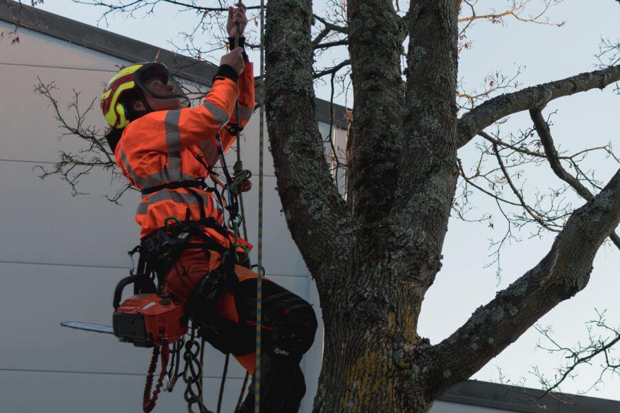 klättrande arborist-jacksons-trädvård