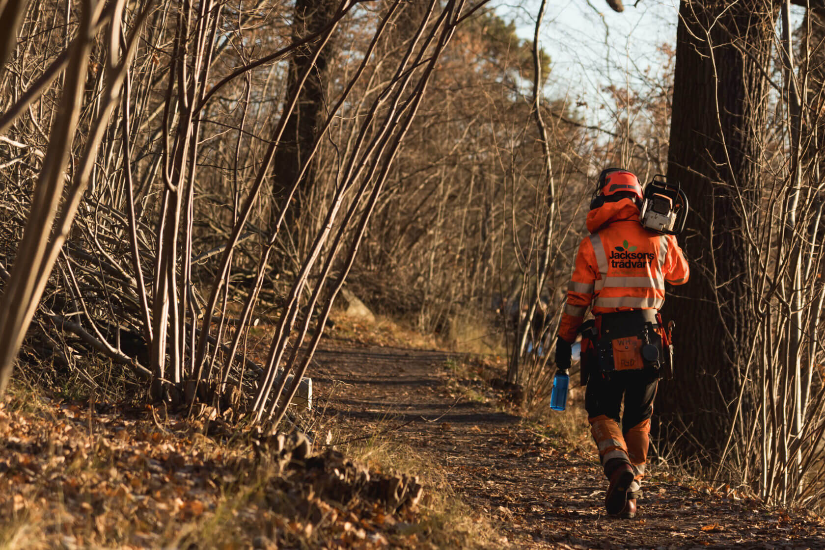 konsulationrådgivning-jacksons-trädvård-skog-sverige