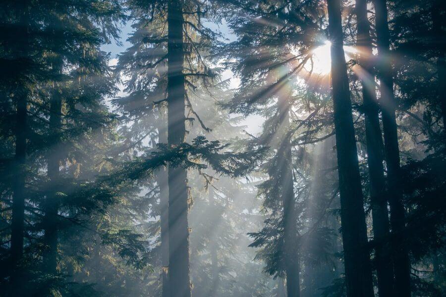 tätortsnäraskog jacksons trädvård sverige