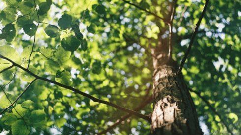 träd-jacksons-trädvård-göteborg