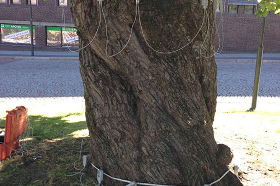 trädbesiktning borås kommun-trädvård
